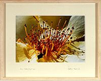"example of framed (66cm x 52cm) ""photograph"""